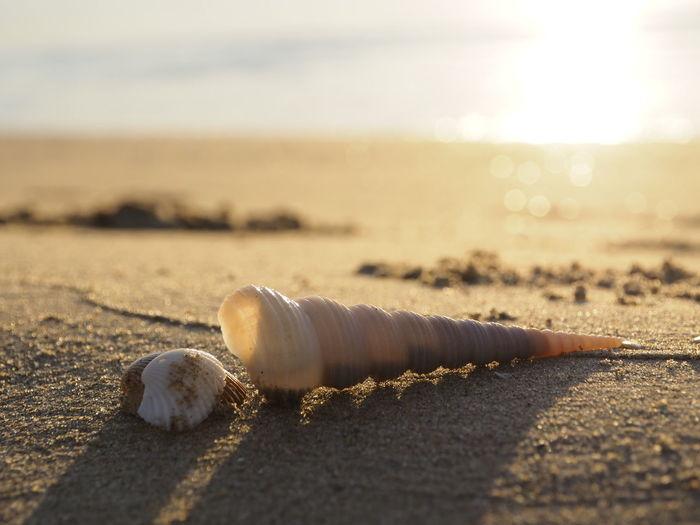 Close-up of shells on beach