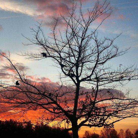 """Nothing is more beautiful than the loveliness of the woods before sunrise."" Georgewashingtoncarver Sunrise Silhouette Sky Cloud - Sky Bare Tree Beauty In Nature Scenics Landscape Beauty Outdoors Tree Nature Dramatic Sky Sunrise Colors Sunrisephotography Crows"