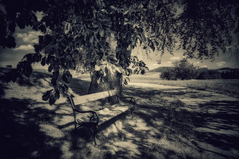 Monochrome Photography Tree Landscape Shadow Tranquil Scene Cold Temperature Scenics Branch Nature Travel Destinations Non-urban Scene Beauty In Nature Outdoors Sky Landscape_photography Austria A Photo Like A Painting Melancholic Landscapes Mystical Atmosphere Capture The Moment Resting Place