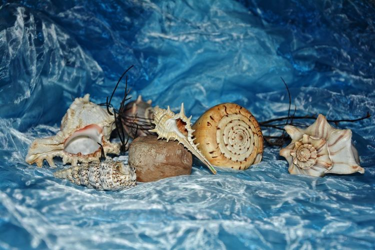 View of many shells  on blue background with copy space