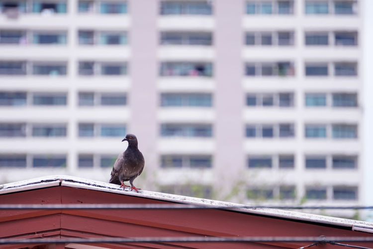 Bird perching on a building