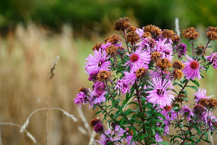 Wild Flowers Flower Head Flower Pink Color Close-up Plant Landscape Wildflower Uncultivated Botany
