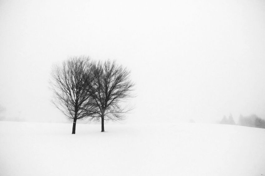 On a cold day Bare Tree Winter Snow Cold Temperature Nature Lone Tranquil Scene Landscape Snow Covered Outdoors