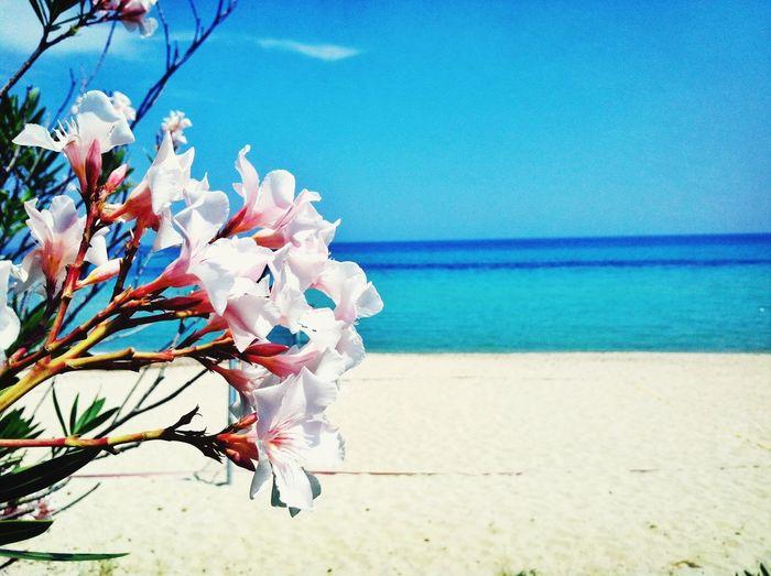 Nature Beach Summer Flower