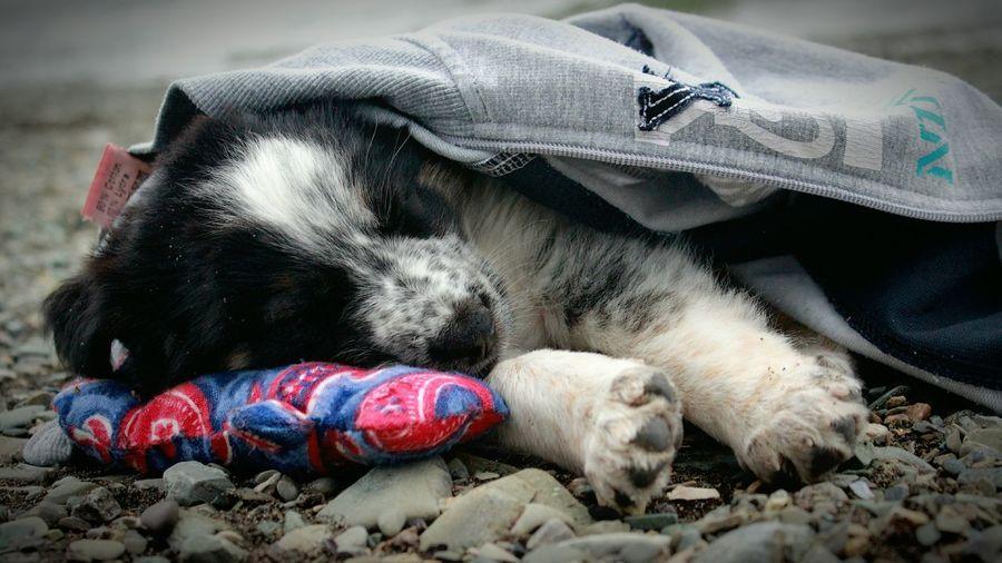 Puppy Sleeping On Field