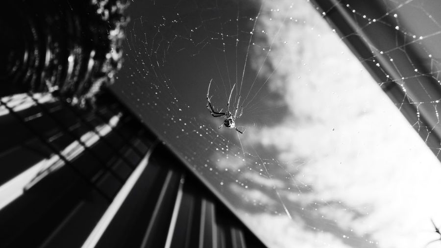 Close-up of spider on web against window