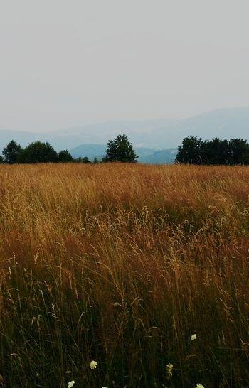 Romania,Hunedoara Nature Romania Landscape Landscape_photography