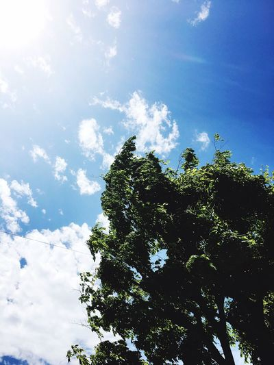 Tree Nature Beauty In Nature Sky_ Collection Green Green Green!  Earysummer Sky_collection Sky EyeEm Best Shots EyeEm Nature Lover