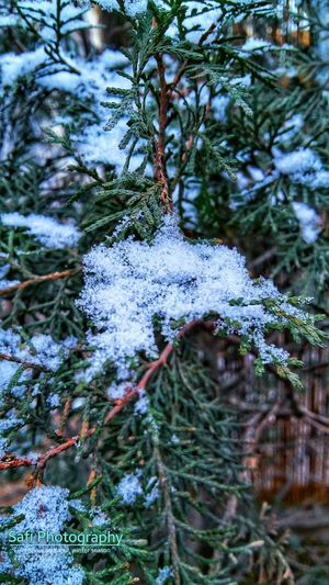 Snow ❄ First_snow Beautiful Nature Awesome! Samsungphotography Cellphone Photography