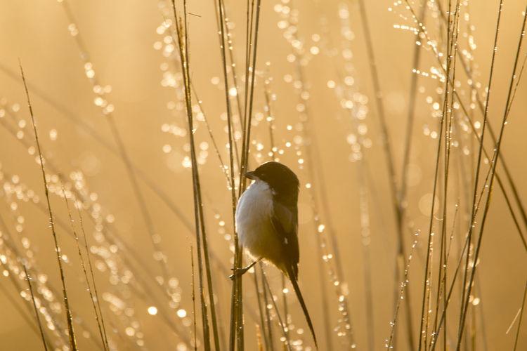 Close-up of wet bird
