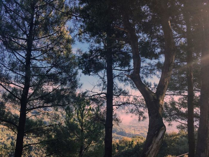 🍀 Nature Tree