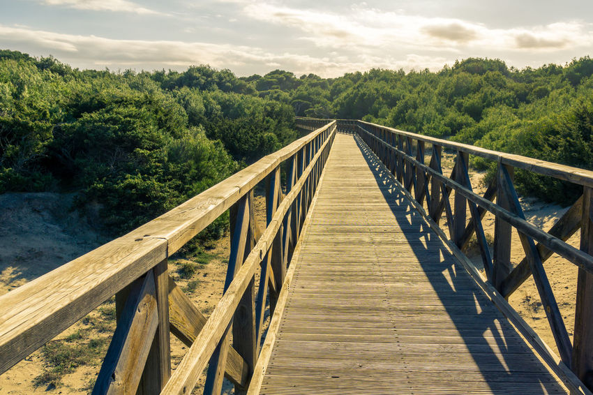 Mediterranean  Wooden Bridge Beach Bridge Beauty In Nature Bridge - Man Made Structure Built Structure Cloud - Sky Day Footbridge Forest Growth Nature No People Outdoors Railing Scenics Sky The Way Forward Tranquil Scene Tranquility Tree Wood - Material Wood Paneling Wooden Bridge In Forest
