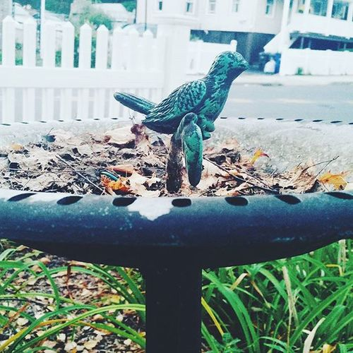 Autumn bird bath Autumninct Autumn Autumnthroughmyeyes Nhv Thatsdarling Thatsdarlingmovement Newengland Northeast VSCO Vsvocam Comment Instaautumn September Birdbaths Birds Leaves ColorsOfAutumn