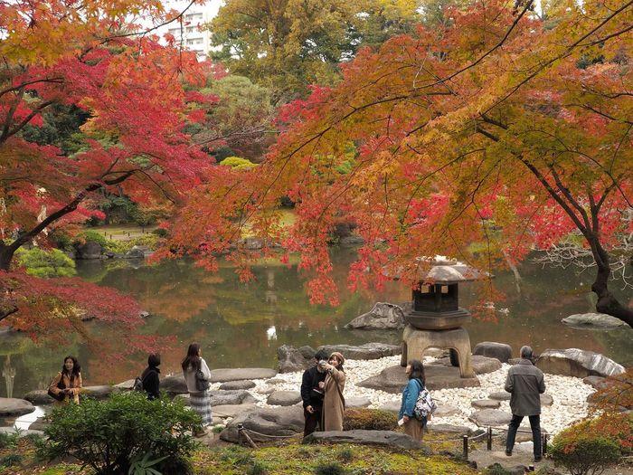 2018/12/01 Sat ☀ おはよ〜ございます。 早いものでもう師走。 今月もよろしくね〜 ファインダー越しの私の世界 ファインダーは私のキャンパス オリンパス Olympus E_M5Mark2 Om_d ミラーレス Photograph Photography カメラ日和 お写んぽ スナップ写真 Tokyo Beautiful カメラのある生活 あなたに見せたい写真がある 写真は心のシャッター 恋するカメラ はなマップ 秋は駆け足 旧古河庭園 Tree Men Women Autumn Leaf Change