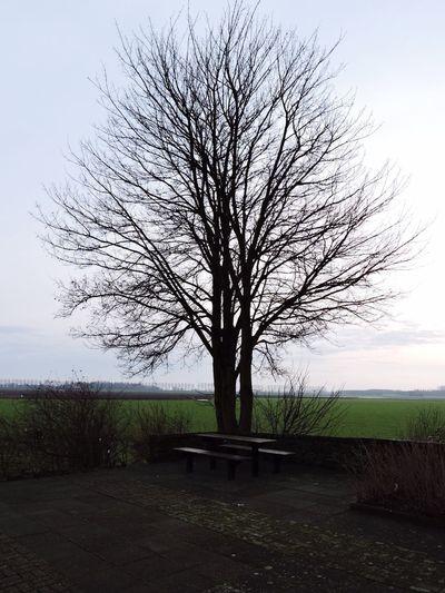 Hugging A Tree Landscape Taking Photos Dordrecht