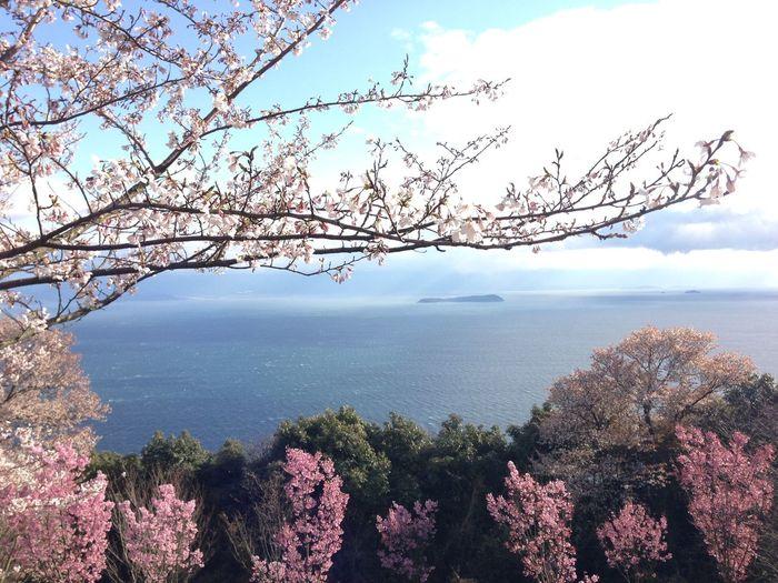Spring Sky Sea