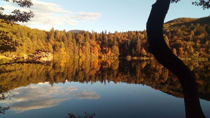 Lake Water Autumn Tree Sky Reflection Beauty In Nature Outdoors Tranquility Nature Italy🇮🇹 Südtirol Sudtiroloaltoadige