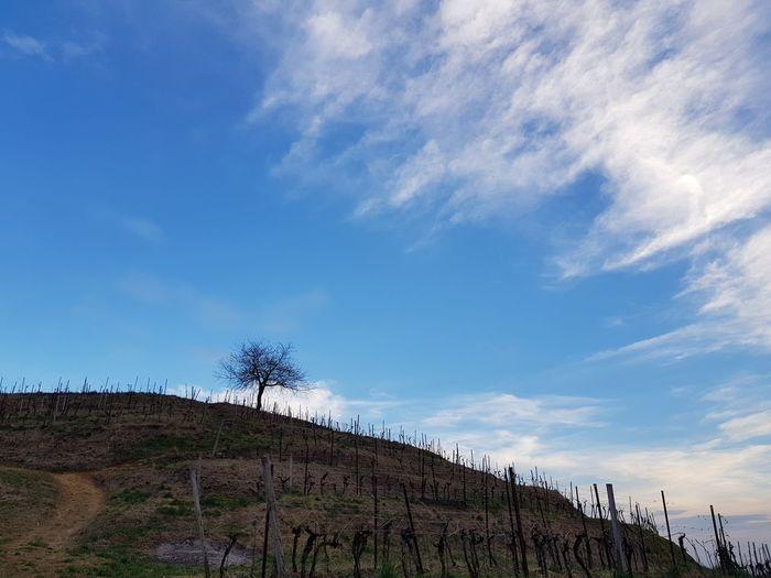 Rural Scene Rural Rural Landscape Tree Blue Sky Cloud - Sky Agricultural Field