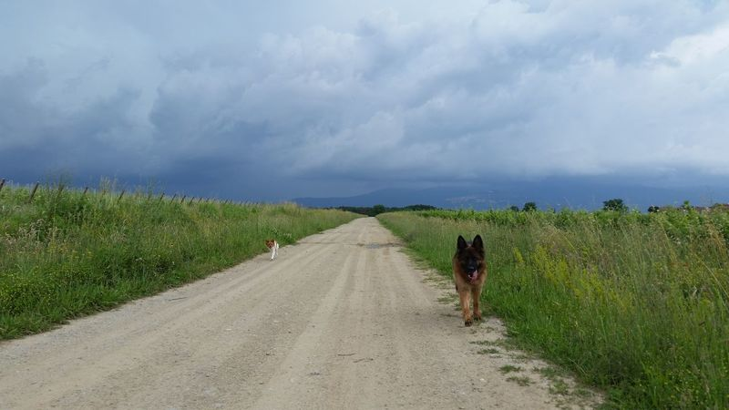 Agriculture Rural Scene Cloud - Sky Walking Outdoors No People German Shepherd Animals Make Us Human 🐾❤🐾 Togetherness Love My Life ❤ Lovemydogs