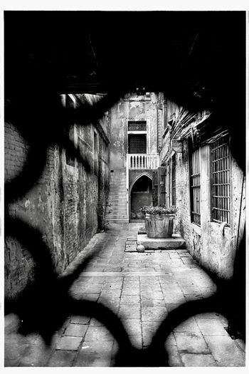 venezia 40years