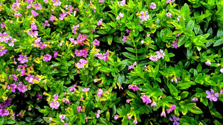 Wallpaper shrub