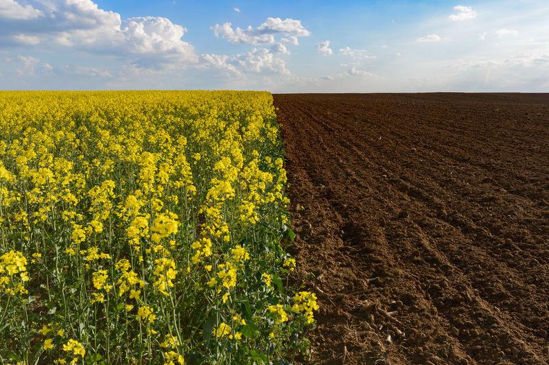 View Of Oilseed Rape By Dirt Field Against Sky