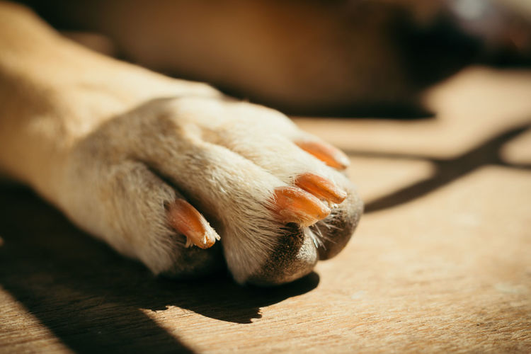 Close-up of a dog paw