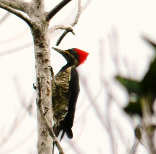 Bird Nature One Animal