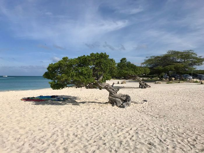 Divi Tree Landscape Relaxation Aruba Antilles Caribbean Travel Sand Beach Sky Cloud - Sky Nature Day Sea Scenics Tree Beauty In Nature Tranquility No People Tranquil Scene Outdoors Water