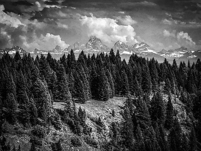 Grand Tetons Tree Plant Nature Sky Cloud - Sky Day No People Tranquility Outdoors Land Scenics - Nature Tranquil Scene Beauty In Nature Forest
