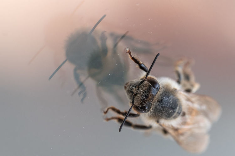 Close-up of bee on a window