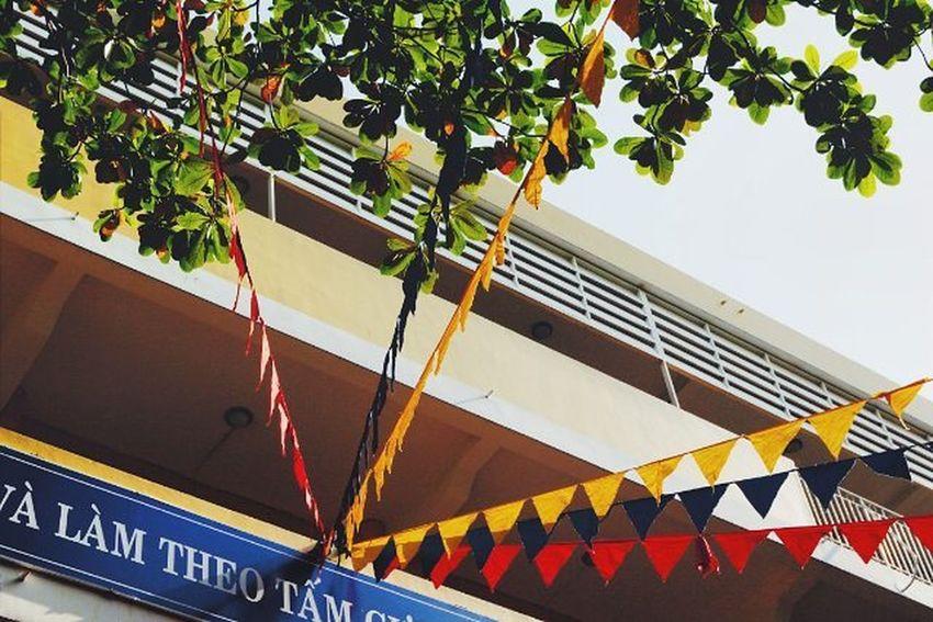 """""""Cây bàng gió thổi lao xao.."""". Heocaoco Bang Ôi hết hình. _____ Thaorphoto Tree Green Vscocam VSCO Vcsovietnam Vietnam Saigon Throwback Oldpic Ig_vietnam Ig_photooftheday Canon Canon_photos Canon70d 70d _____"""
