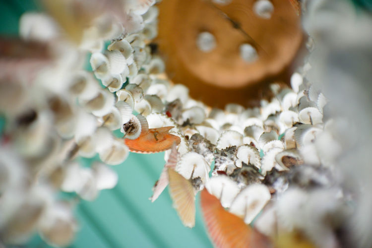 Pearl Jewelry Still Life White Color Food Animal Themes Luxury Food And Drink Animal Shell Large Group Of Objects Decoration Day Indoors  Shell Animal Wildlife Necklace Animal Art And Craft Jewelry No People Plant Selective Focus Close-up EyeEm Best Shots EyeEmNewHere EyeEm Nature Lover