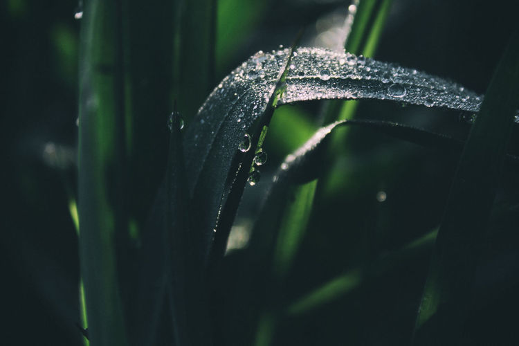 Close-up of wet leaf on grass
