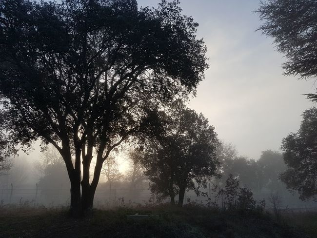 Durance Tree Nature Outdoors No People Fog Morning Light Morning