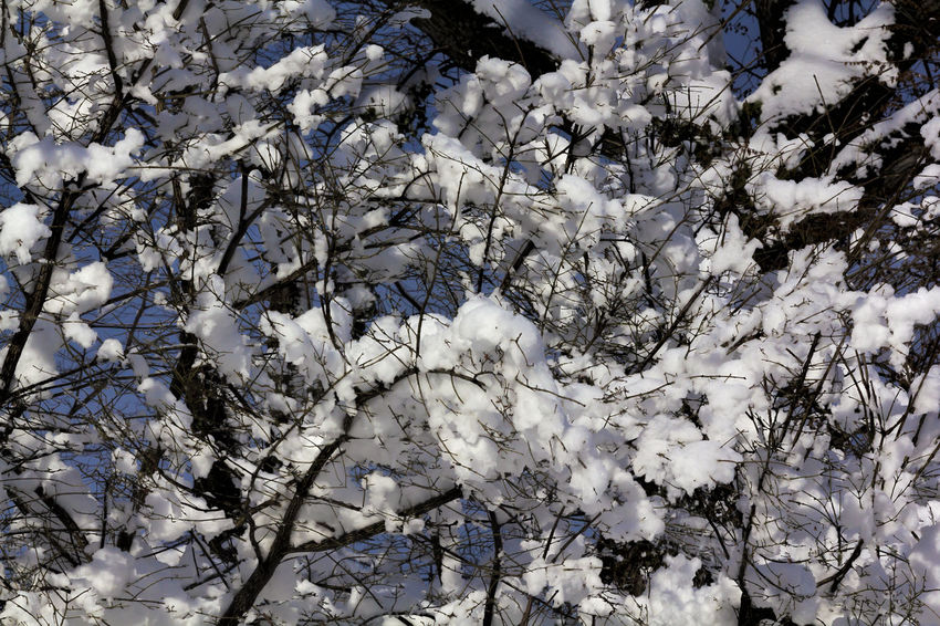 Snow and Trees After Snowstorm Nature Snow And Ice  Bracnches Branches And Snow Natur Snow