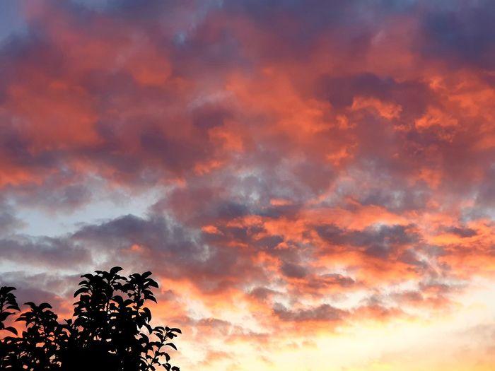 todays sunset