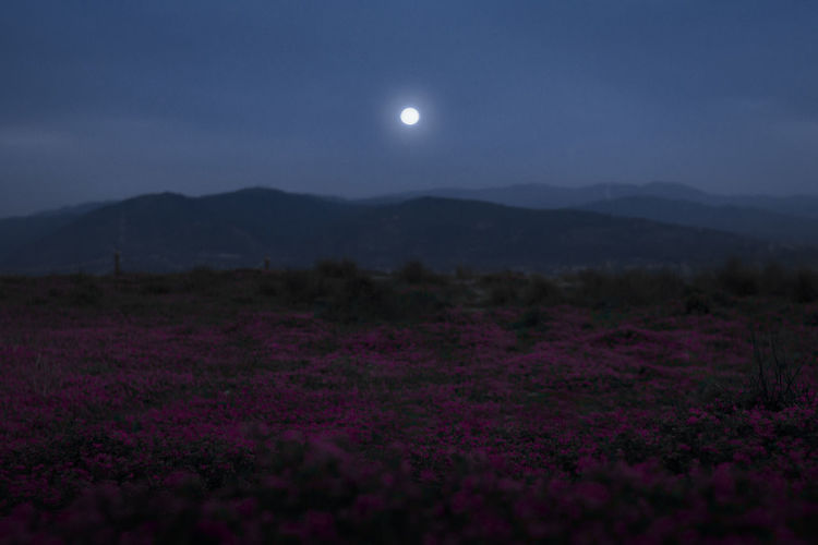 Moon Sky Flower Night Nature Scenics - Nature Full Moon Beauty In Nature Plant Environment Flowering Plant Landscape No People Mountain Land Outdoors Tranquility Field Moonlight Tranquil Scene Purple