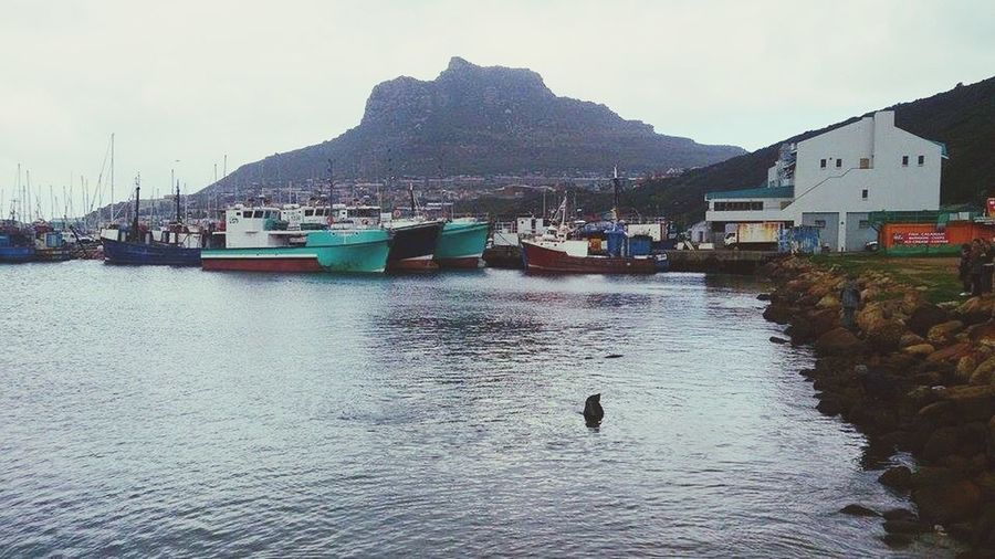 South africa <3