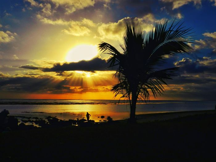 Beach Beauty In Nature Cloud - Sky Horizon Over Water Idyllic Mauritius Island  Nature No People Outdoors Palm Tree Scenics Sea Silhouette Sky Sun Sunset Tranquil Scene Tranquility Tree Tree Trunk Water