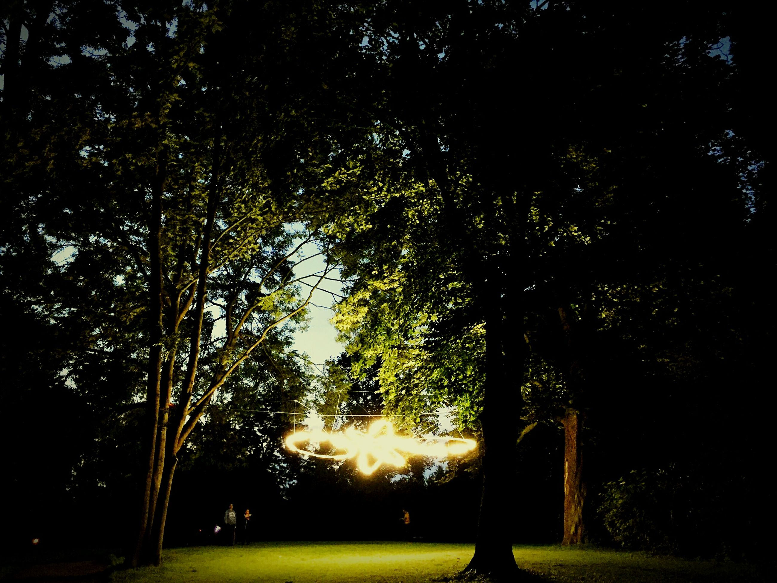 tree, grass, tranquility, park - man made space, street light, growth, silhouette, nature, sunlight, night, illuminated, green color, sky, tranquil scene, field, beauty in nature, branch, outdoors, scenics, tree trunk