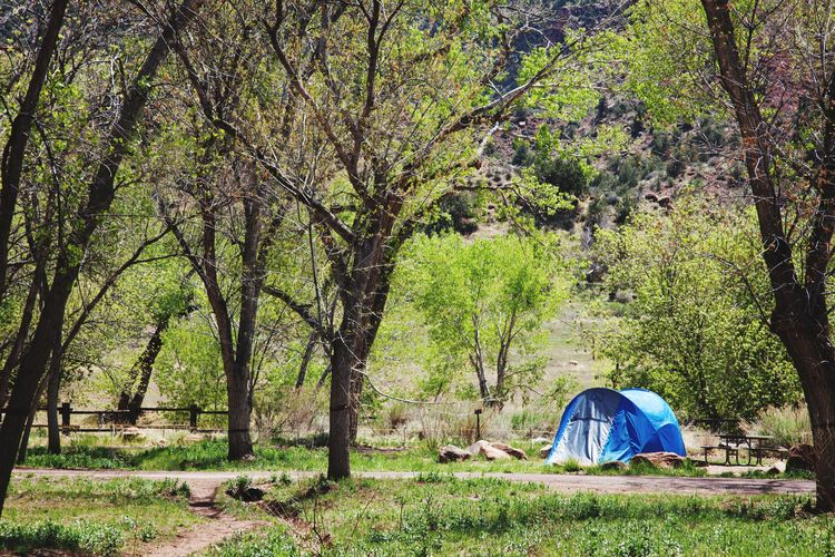 Camping Tent Tree Camping Nature Grass No People Outdoors Campground Summer Vacation Zion National Park Zion Canyon Utah Blue