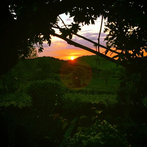 Landscape IPhoneography Sunset Plant Tree Sunset Sky Silhouette Nature Growth Sunlight Branch Tranquility No People Beauty In Nature Outdoors Orange Color Sun Scenics - Nature Tranquil Scene Plant Part
