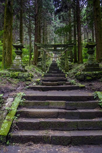 Japan KYUSHU Kamishikimi Lanterns Stone Lanterns Day Forest Nature No People Outdoors Staircase Steps Steps And Staircases Stone Temple The Way Forward Tranquil Scene Tranquility Tree
