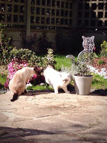 Showcase April April Sunshine Cats Three Animals Love Them Taking Photos Enjoying Life Garden 🍃☀️🐱