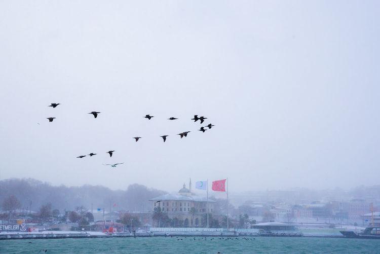Flock of birds flying over sea against clear sky
