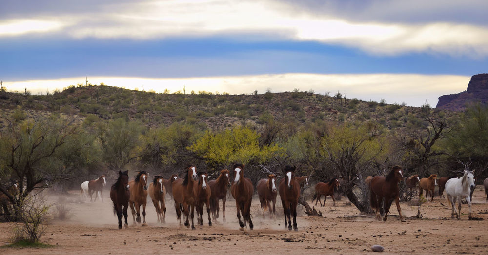 Panoramic view of horses on landscape