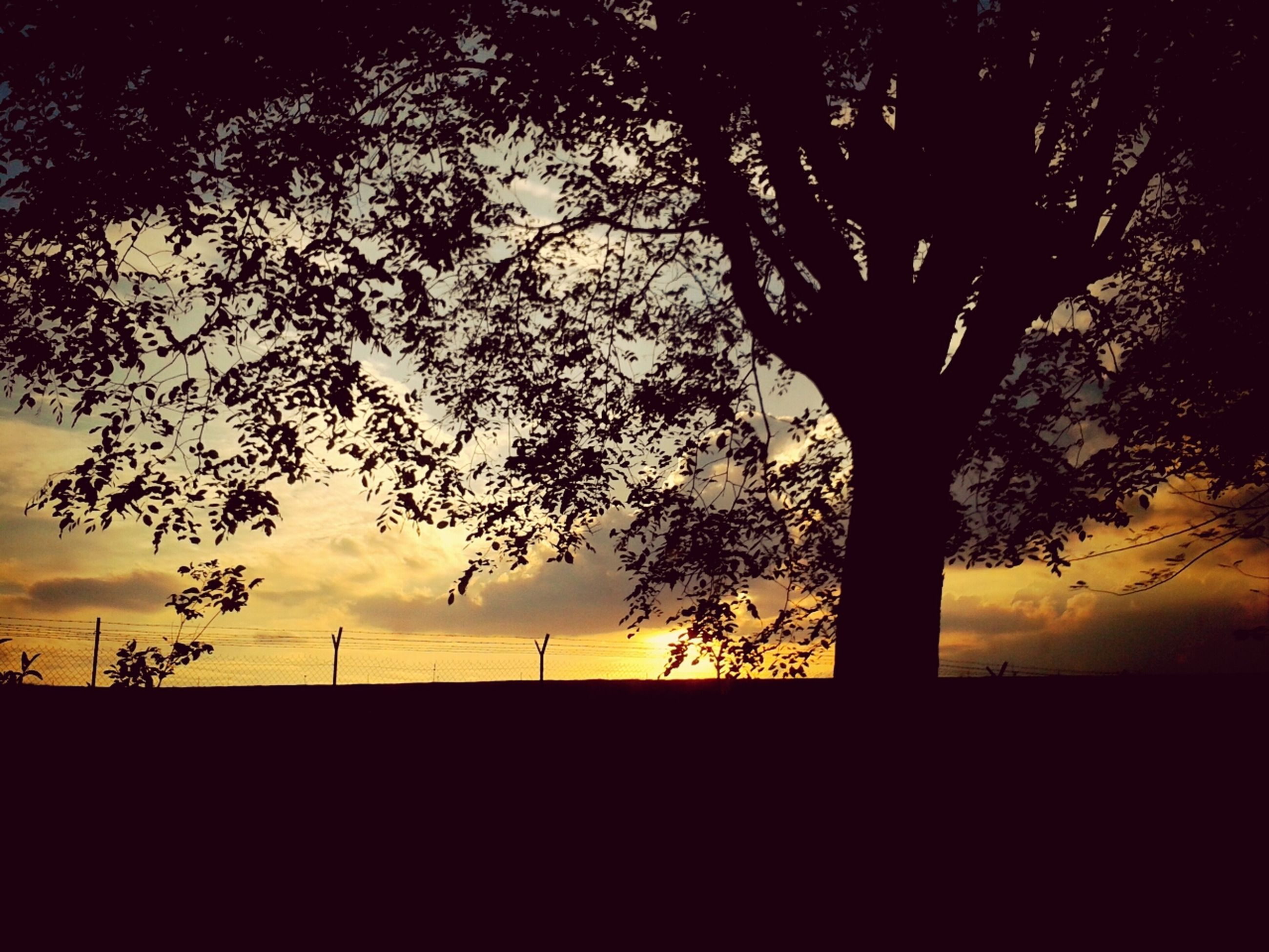 silhouette, tree, tranquility, tranquil scene, sunset, scenics, beauty in nature, sky, branch, nature, landscape, bare tree, tree trunk, field, idyllic, growth, non-urban scene, dark, no people, outdoors