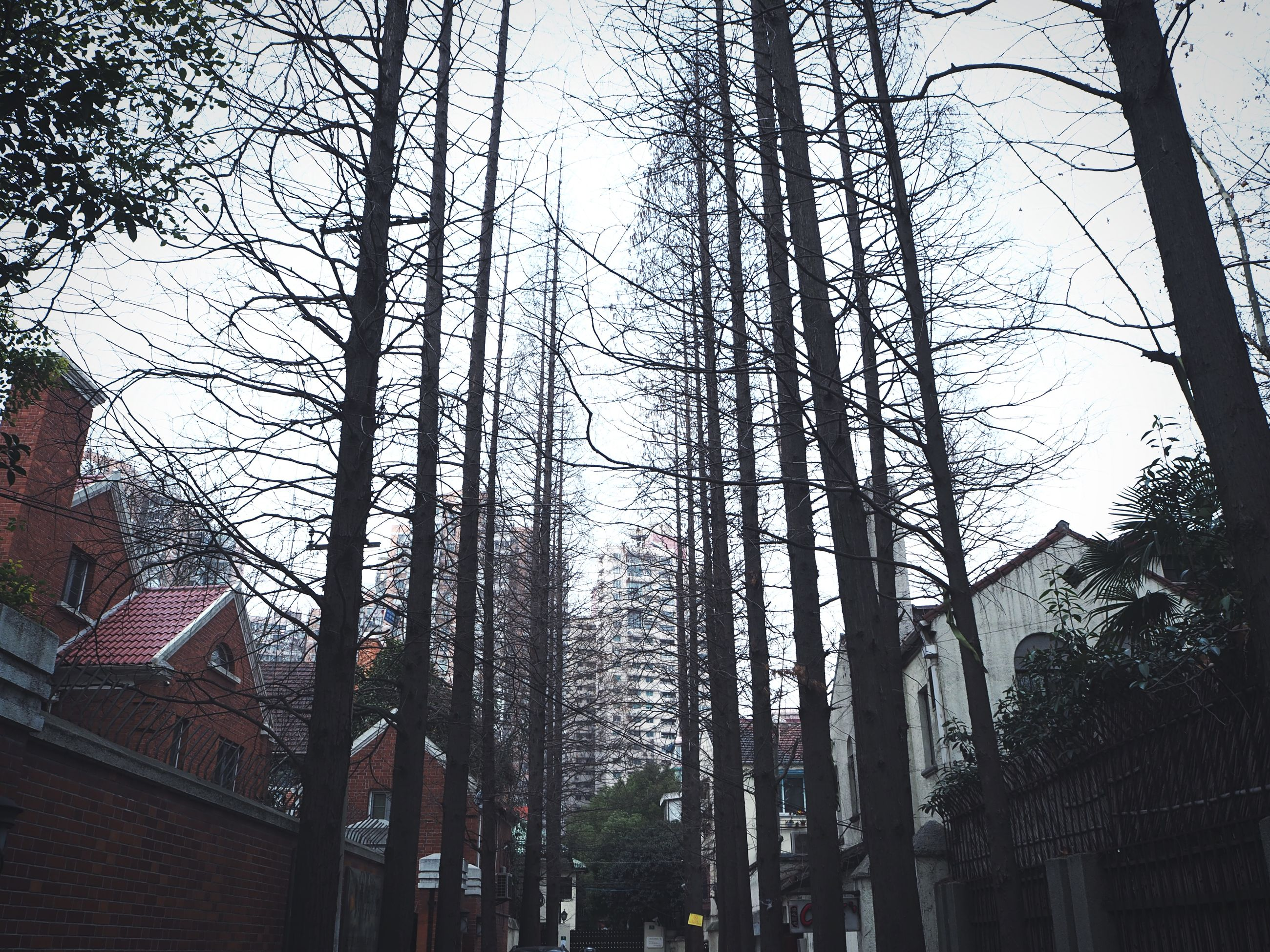 low angle view, tree, architecture, built structure, building exterior, tall - high, bare tree, clear sky, city, branch, sky, building, tree trunk, skyscraper, office building, day, modern, growth, outdoors, tower