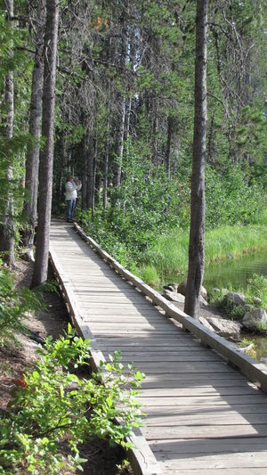 Forest Outdoors Pathway Walking Wooden Pathway WoodLand